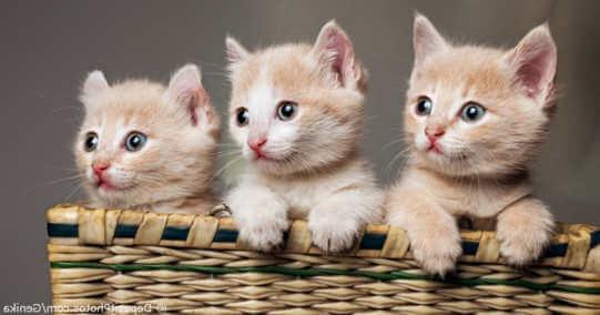Kucing Lucu Dan Imut Dari Berbagai Jenis