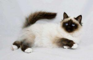 contoh kucing lucu