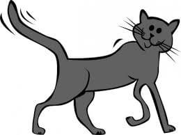 foto kucing kartun