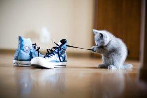 foto kucing